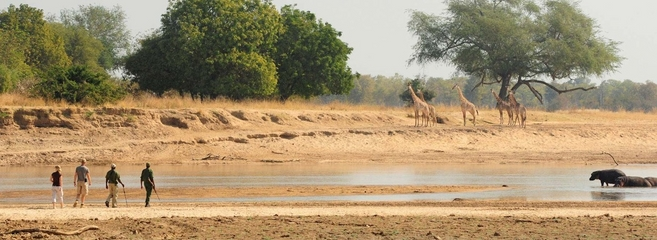 Safari Zambia (Copy)